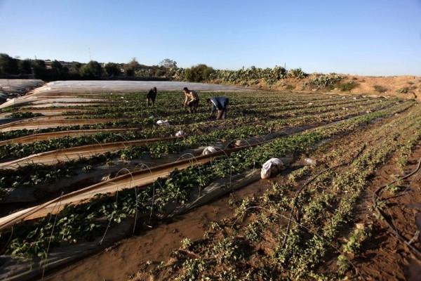 الزراعة: نعمل لإغاثة المزارعين من الأضرار التي لحقت بهم بالمنخفضات الجوية