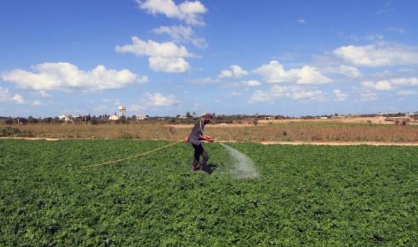 الزراعة بغزة: نعمل على منع التمدد السكاني غير المدروس بالأراضي الزراعية