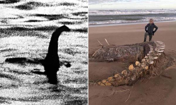 """وحش غامض يخرج من أعماق البحر بسبب عاصفة """"كيارا"""" يحير العلماء"""