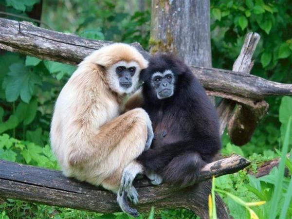 """قصة زنا القرد والقردة ورجمهما في """"البخاري"""" يثير غضب داعية إماراتي"""