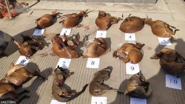 """تهريب """"حيوانات كورونا"""" مستمر في الصين  رغم الحظر"""