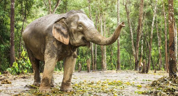 شاهد: لحظات مدهشة لفيل يحاول الاستحمام