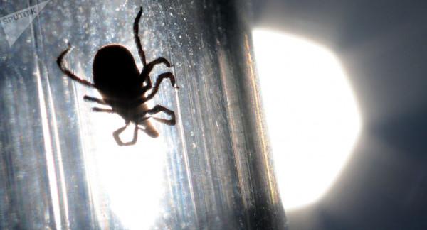 تلتهم ضحيتها من الداخل للخارج.. فيديو يوثق مدى قوة كائنات طفيلية مجهرية
