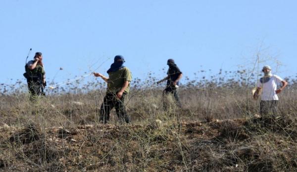 بالفيديو: مستوطنون يقطعون مئات أشجار الزيتون والكرمة جنوب بيت لحم