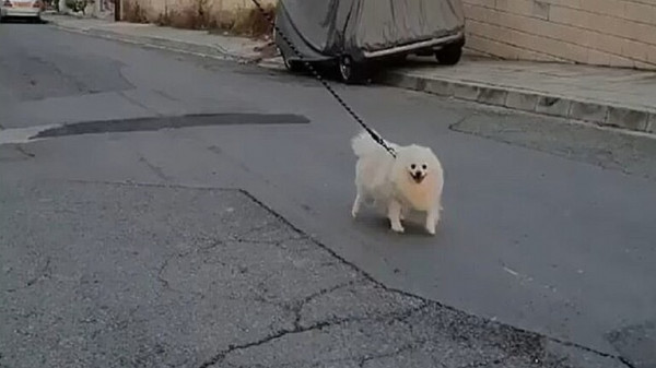 شاهد: رجل يجد طريقة طريفة لتنزيه كلبه دون الخروج من منزله