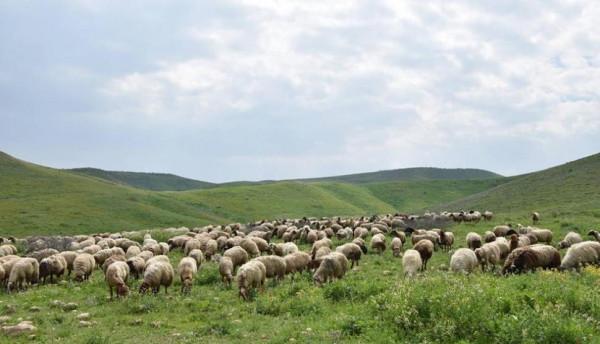 الإغاثة الزراعية تناشد الجهات الرسمية بمراقبة الاسواق والوقوف لجانب مربي الثروة الحيوانية