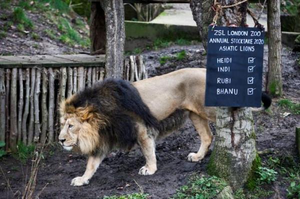 أقدم حديقة حيوان في العالم لم تسلم من ضربات (كورونا)