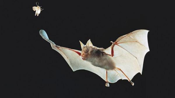ما لا تعرفه عن الخفافيش التي تسببت في ظهور (كورونا)