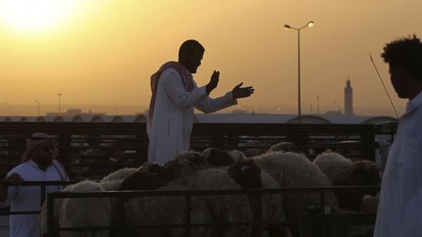 شاهد: ذئب يقتحم مزرعة ويفترس 16 رأسا من الأغنام بالسعودية