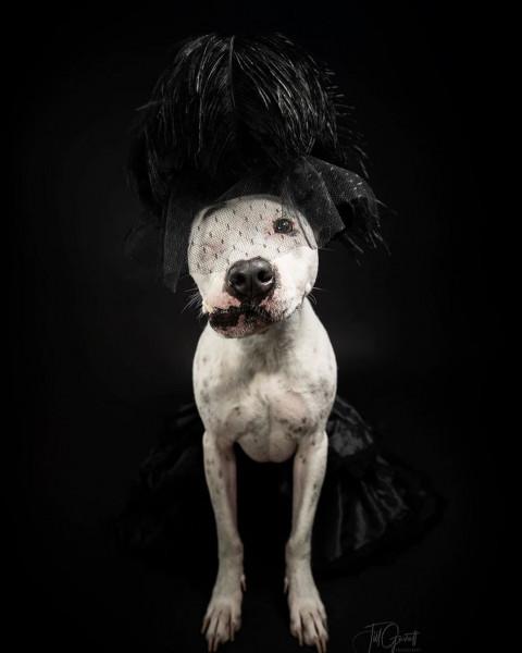 بعد إطلاق النار عليها وضربها بمطرقة.. كلبة تتحول لنجمة على السوشيال ميديا