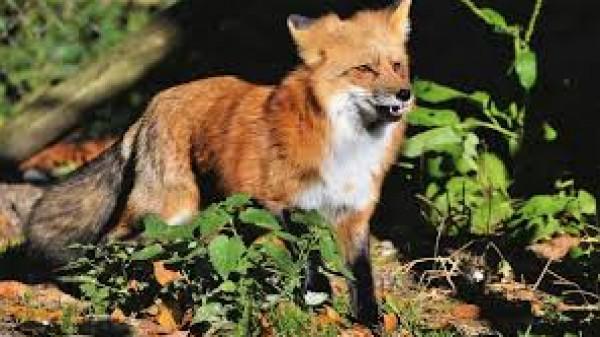 رغم (كورونا).. زيادة في الصيد غير القانوني للحيوانات البرية
