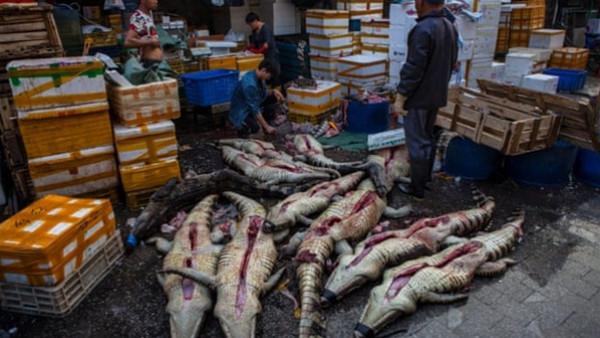 أسواق الحيوانات البرية المذبوحة كارثة تهدد العالم بأوبئة جديدة
