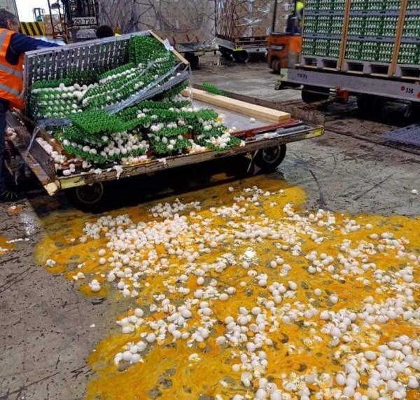 شاهد: تكسر كمية كبيرة من البيض بداخل مطار (بن غوريون)