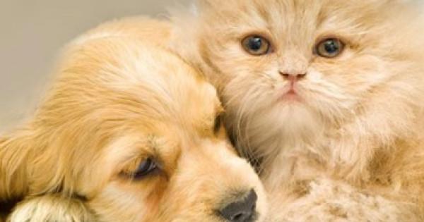 (كورونا) يفرض حظرا على الحيوانات الأليفة فى الفلبين