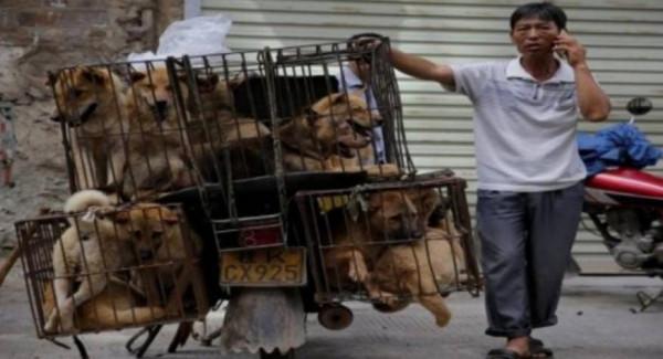 لأول مرة: الصين تحظر أكل الكلاب والقطط بعد انتشار فيروس (كورونا)