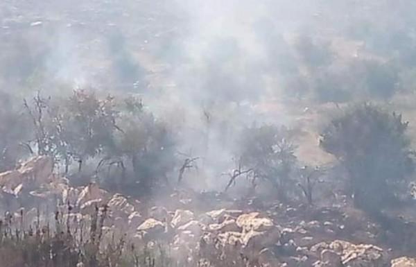 الدفاع المدني: السيطرة على 10 حرائق من الاشجار والاعشاب في محافظة طولكرم