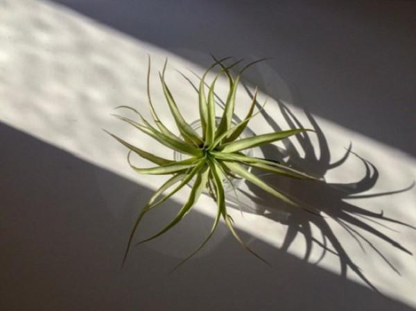 شاهد أفضل أنواع النباتات لمكتبك المنزلي