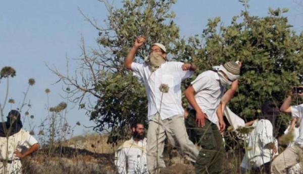 إصابات باعتداء للمستوطنين على مزارعين شمال رام الله
