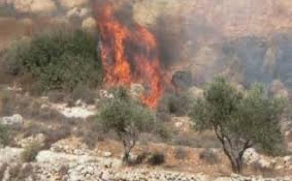 مستوطنون يحرقون 30 دونما من المحاصيل الزراعية جنوب الخليل