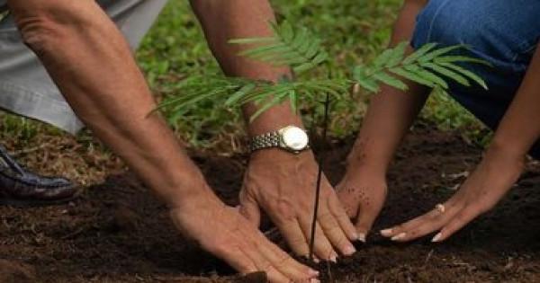 خمس خطوات لزراعة شجرة البونسيانا فى المنزل