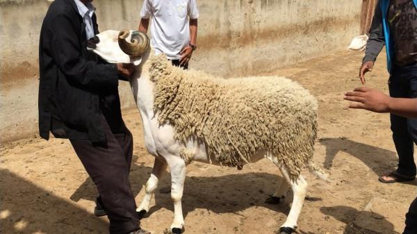 أول دولة عربية تدرس إلغاء احتفالات عيد الأضحى بسبب (كورونا)