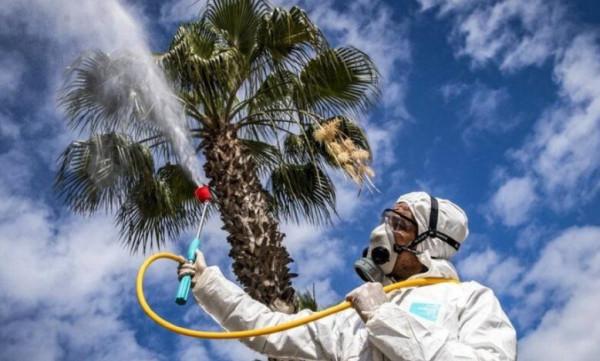 الصحة العالمية: فيروس (كورونا) يتراجع صيفاً ويُعاود نشاطه في الخريف