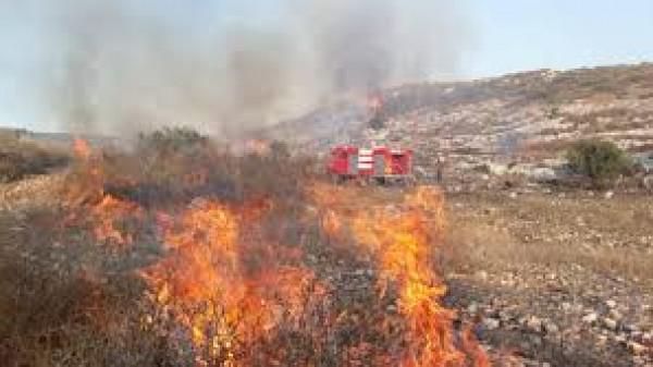 مستوطنون يضرمون النار بأشجار الزيتون في حوارة جنوب نابلس