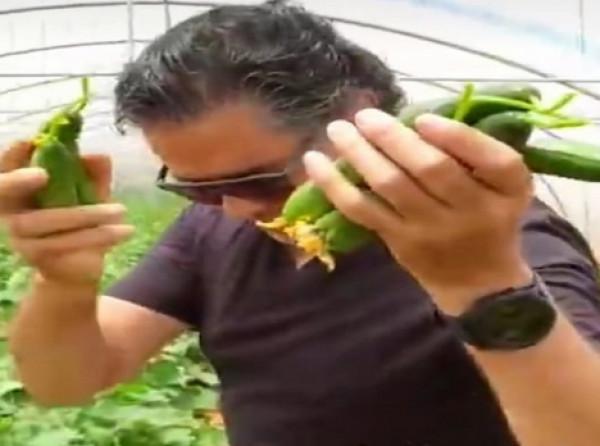 مشاهير لبنان يتجهون نحو الزراعة.. وراغب علامة يقطف من محصوله