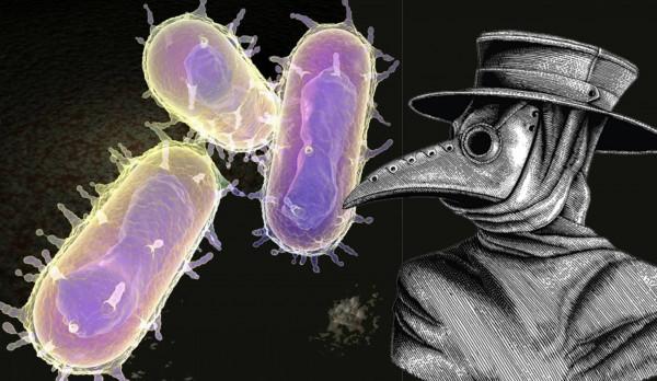 (الطاعون الدملي) ما قصة الوباء القادم من العصور الوسطى؟