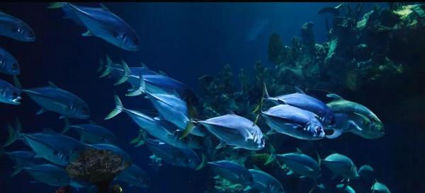 60% من الأسماك ستنقرض لهذا السبب