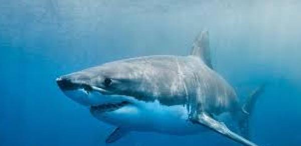 هجوم سمكة قرش يفتك بشاب