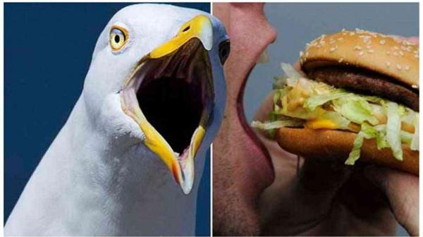 يهجم على طائر ويعضه لأنه أكل شطيرته