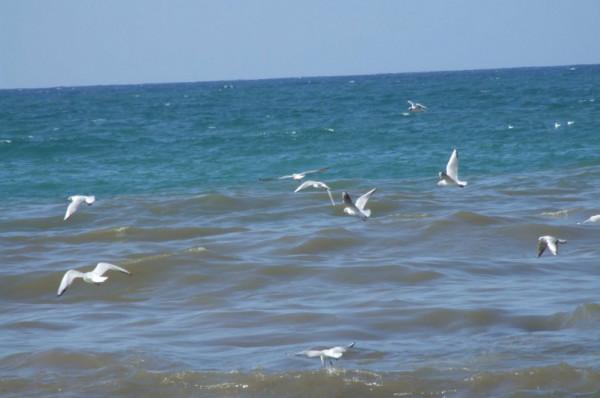 السراج: الفحوصات المخبرية لبحر غزة أظهرت مادة جديدة غير محمودة بمياهه