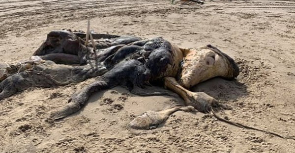 أثار الرعب... العثور على مخلوق طوله 15 قدما في بريطانيا