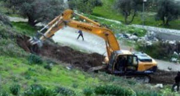 قوات الاحتلال تقتلع عشرات أشتال النخيل في الجفتلك بالأغوار