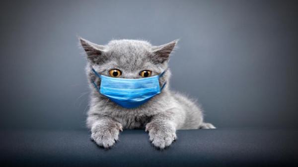 دراسة صينية تكشف نتائج تحذيرية حول مدى نقل القطط لفيروس (كورونا)