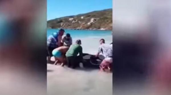 شاهد: انقاذ حوت أحدب قذفته الأمواج الى أحد السواحل البرازيلية