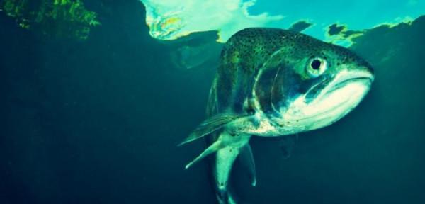 شاهد: ما قصة سمكة زامبيا الشهيرة التي نعاها رئيس دولة ؟