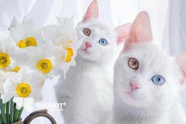 اشهر قطة على السوشال ميديا 9999075553