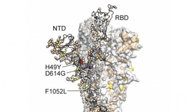 دراسة حديثة : فيروس (كورونا) يتحور بشكل مخيف وسينتشر بسرعة كبيرة