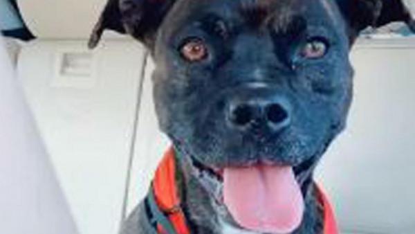كلبة تعود إلى صديقتها بعد اختفاء ثلاث سنوات