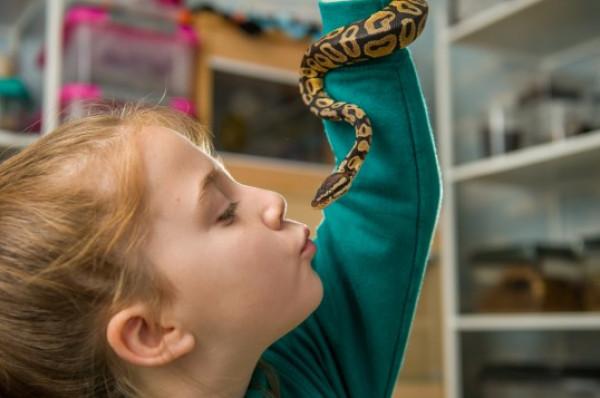 طفلة تحتفظ بعشرات العناكب والثعابين في غرفتها لسبب غريب