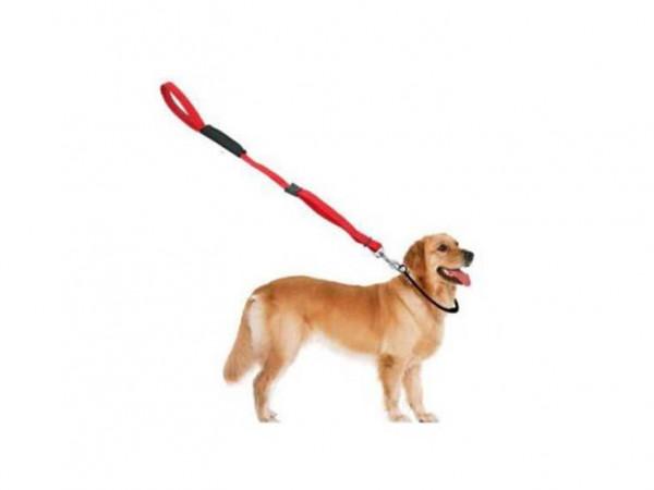 أيهما أفضل للتعامل مع كلبك الطوق أم السراج؟