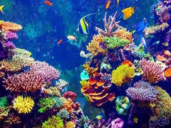 تحذير.. خسارة نصف شعاب الحاجز المرجاني العظيم منذ التسعينيات