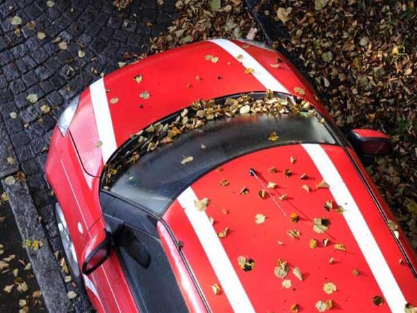 خبراء يحذرون من أوراق الأشجار المتساقطة على السيارة.. لهذه الأسباب