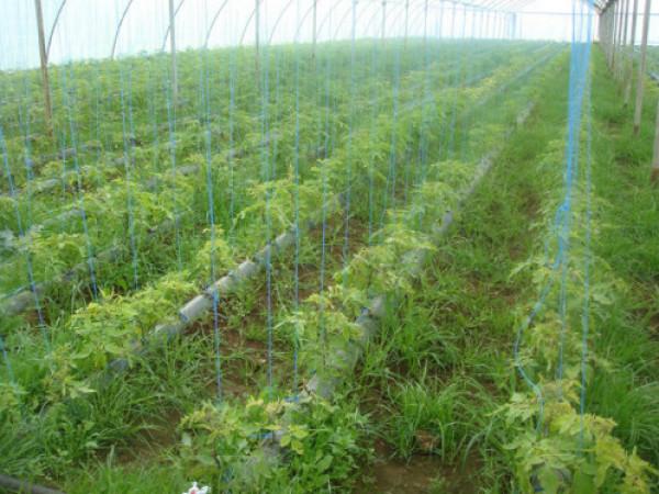 الزراعة تنفي ادعاءات حول متبقيات المبيدات الحشرية في بعض المنتجات الزراعية