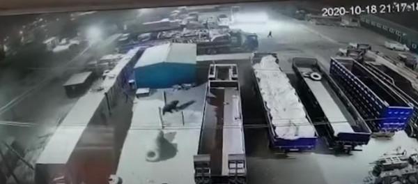شاهد: دب يتجول في شوارع مدينة ماغادان الروسية ويرعب سكانها