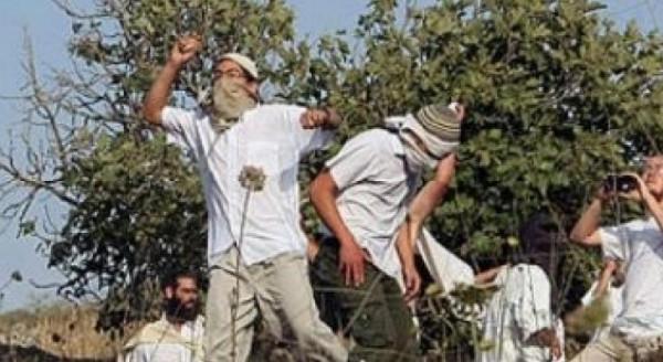 مستوطنون يقتلعون أشجار زيتون في بروقين غرب سلفيت