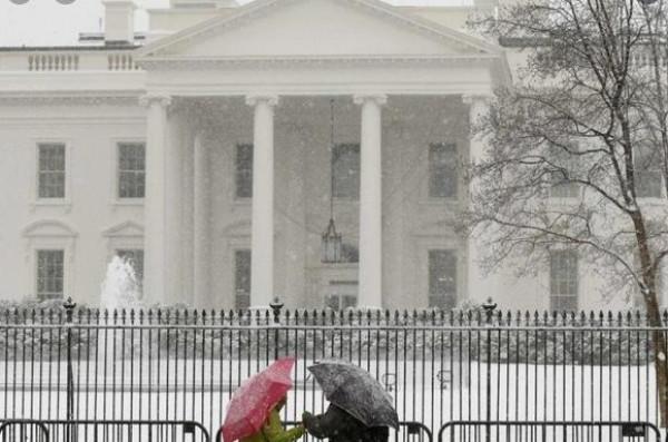 شاهد: بعد ترامب.. كلاب البيت الأبيض الجديدة