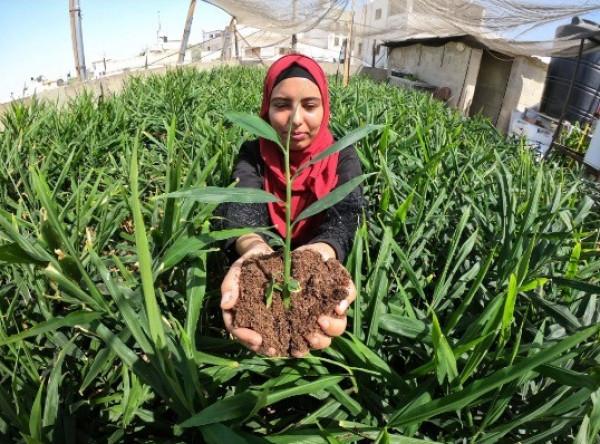 ما قصة هديل قشوع فتاة الزنجبيل الأولى في فلسطين؟